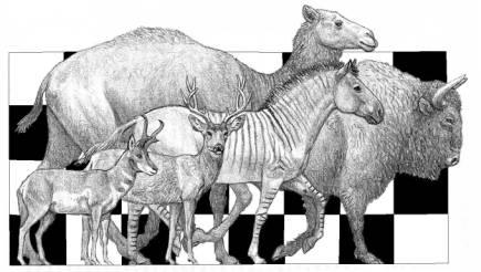 Camelops_hesternus_04