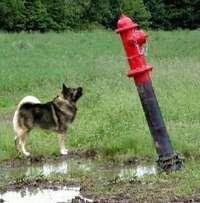 Doghydrant2