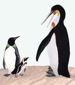 Ancientpenguins